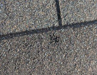 Roof Hail Damage Zionsville IN