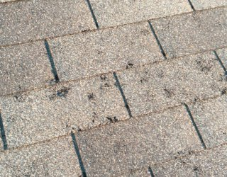 roof hail damage asphalt shingles